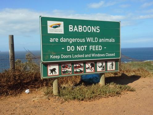 Un vendredi au Cap